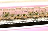 Foto Kieler Pflanzenforschungszentrum