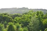 05_Vegetation_218