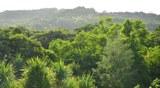 05_Vegetation_480