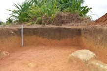 Planting pit in the profile of one of the test trenches