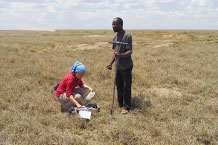 Soil sampling on grassland in the southeastern Serengeti plains. Soils are influenced by frequent input of carbonatitic volcanic ash from nearby Ol Doinyo Lengai volcano